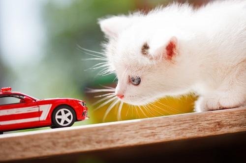 車のおもちゃと猫