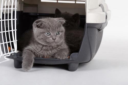 ケースに入れる猫