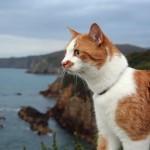 海を眺める猫