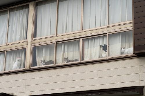 窓からのぞく5匹の猫