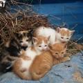 多頭飼いの猫