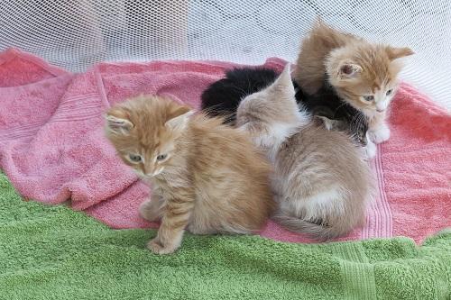 猫とピンクのタオル