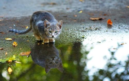 水だまりにいる猫