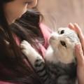 白猫と飼い主