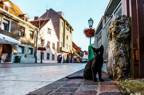 道路にいる黒猫