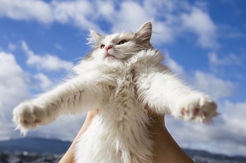 猫を抱っこする