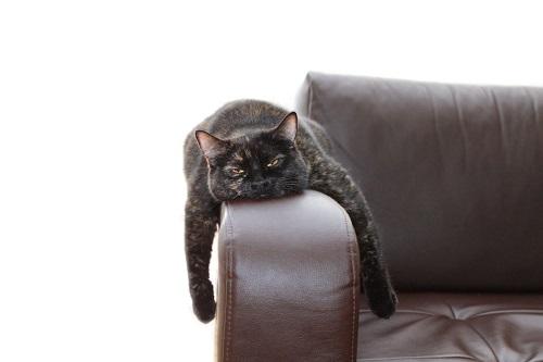 ソファで寝る黒猫