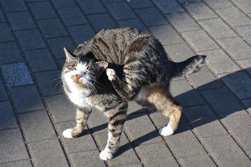 後ろ足で顔をかく猫
