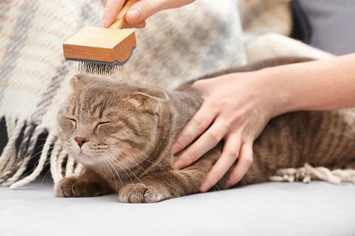 ブラッシングする猫
