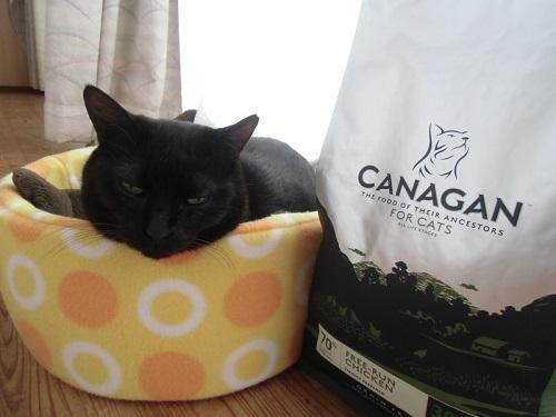 カナガンを食べる猫