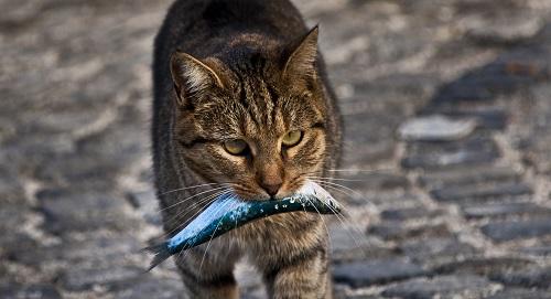 魚をくわえる猫