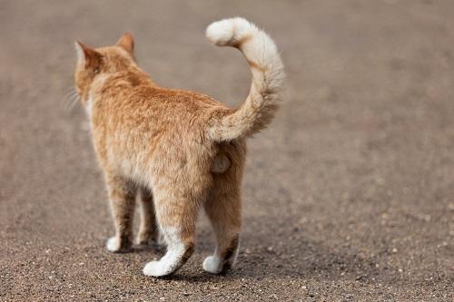 以前飼っていた猫は、寝ているときに名前を呼ぶとしっぽで返事をしていました。それも、めんどくさそうにしっぽを振るのです。よく見ると、猫のしっぽはいろいろな動き  ...