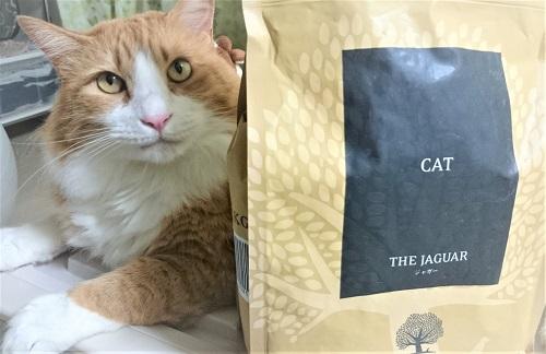 ジャガーキャットフードと猫