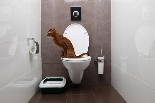 トイレにのる猫