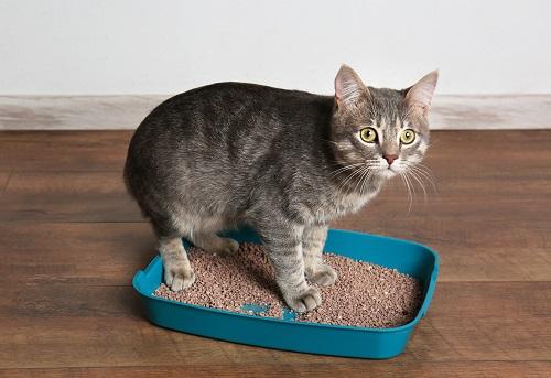 トイレ中にこちらを見る猫