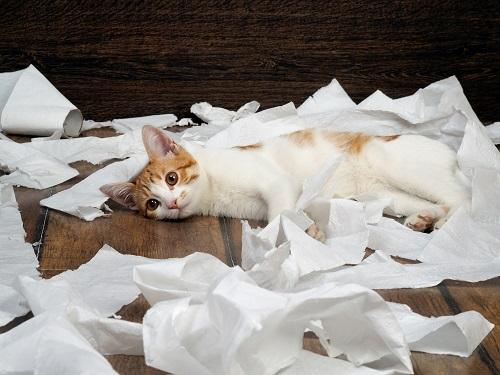 トイレットペーパーで寝る猫