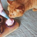 クリームを舐める猫