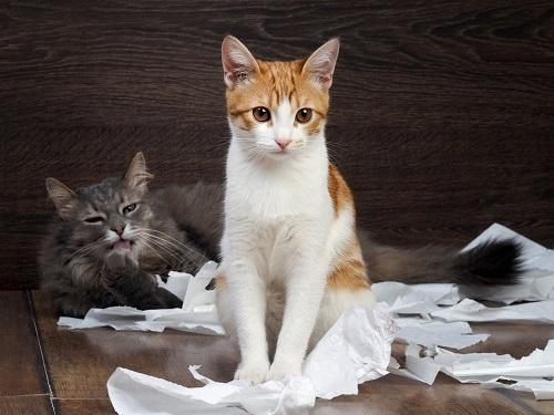 猫とティッシュ