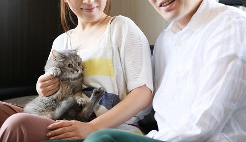ネコを抱っこする