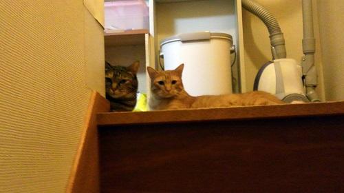 階段の上にいる猫
