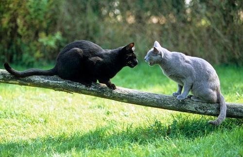 向かい合う猫