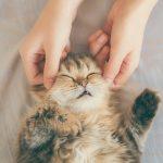 猫のマッサージ