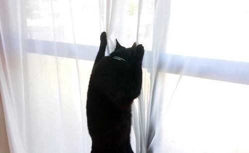 爪を立てる猫