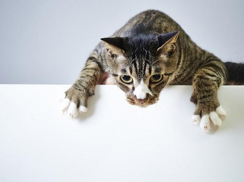 猫のしかり方