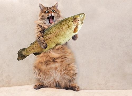 魚をかむ猫