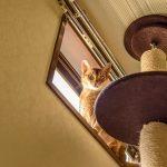 タワーにいる猫