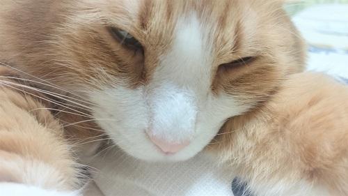 目が細い猫