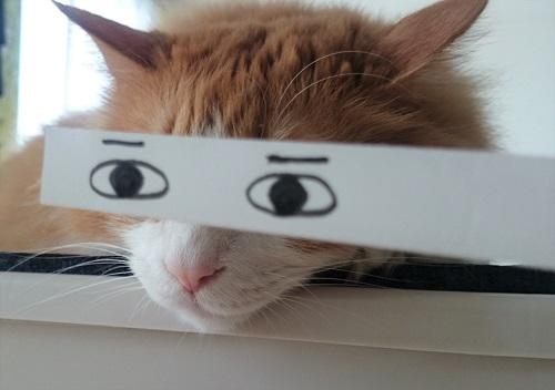猫のモンタージュ
