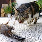 鳥を狙う猫