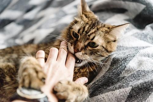 猫が指をかむ
