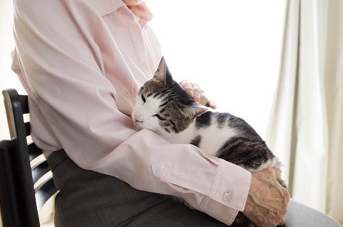 ネコを抱く老人