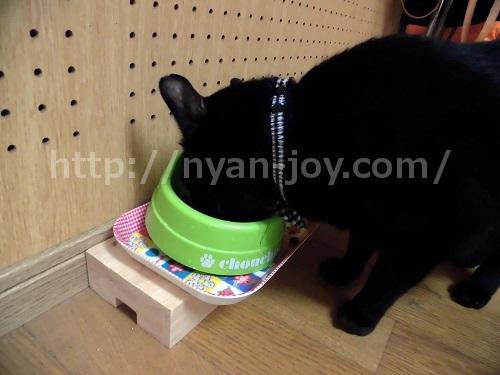 猫のエサを食べる