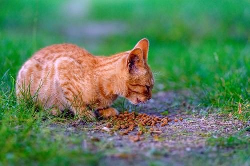 子猫とフード