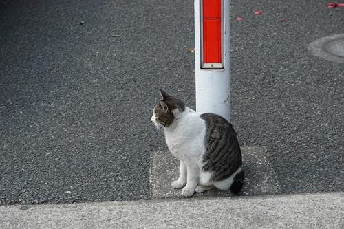 電信柱と猫