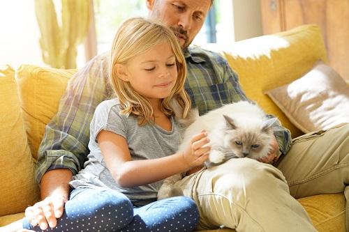 ソファで猫を抱く
