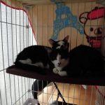 2匹の猫ちゃん