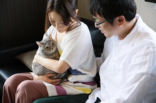 カップルに抱っこされる猫