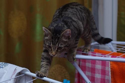 物干しを渡る猫