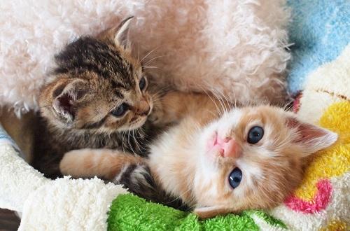 猫転ぶ子猫2匹