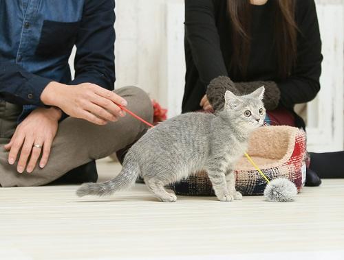 玉で遊ぶ猫