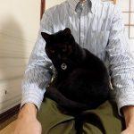 膝の上に乗る猫