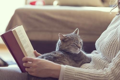 猫と本を読む