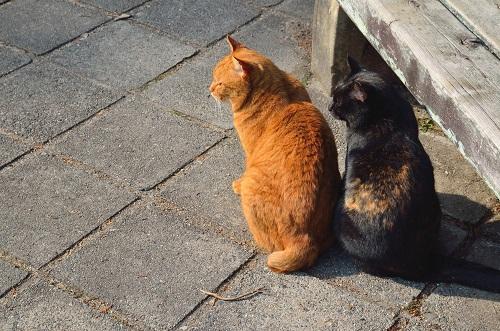 背中を向ける猫2匹