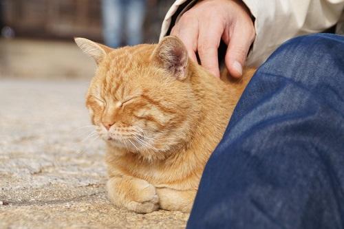 昼下がりのネコ