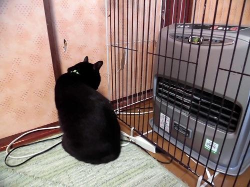 ストーブの前にいる猫