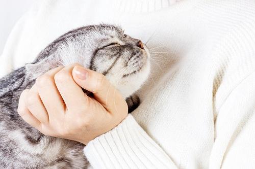 猫を抱く白ニット